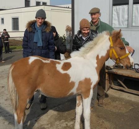 tesi progetti cavalli carcere